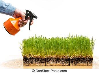 homem, aguando, fresco, grama verde, ligado, um, tabela