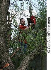 homem, chainsaw, árvore