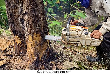 homem, com, chainsaw, corte, a, árvore