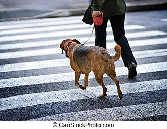 homem, com, um, cão, cruzando rua
