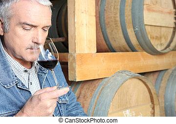 homem, degustação vinho, em, adega