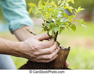 homem jovem, plantar, jardim