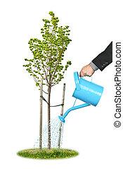 homem negócios, aguando, jovem, árvore