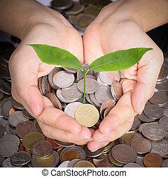 homem negócios, cobertura, crescendo, planta