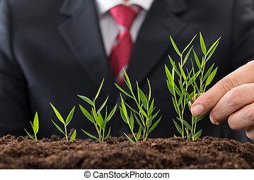 homem negócios, plantar, sapling