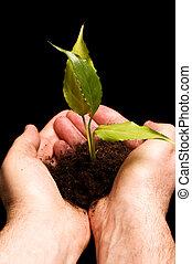 homem, segurando, um, pequeno, planta, em, mão