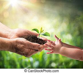 homem velho, dar, planta jovem, para, um, criança, -, meio ambiente, proteção, para, novo, geração