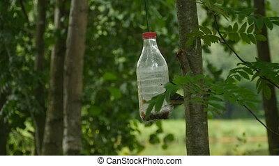 homemade bird feeder from a plastic bottle - homemade bird...