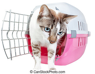 Homemade cute cat out of the cage. On a white background.