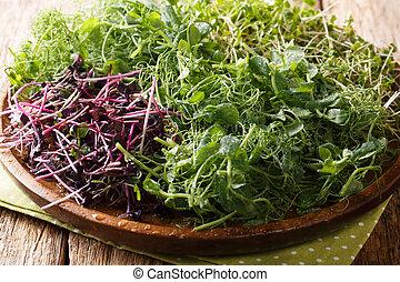 Homemade fresh microgreen from peas, cilantro, mustard, radish close-up on a plate. horizontal