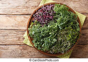 Homemade fresh microgreen from peas, cilantro, mustard, radish close-up on a plate. horizontal top view