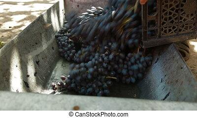 Homemade Wine Production - Homemade wine production - tread...