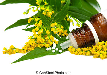 Homeopathy, Solidago globules with blossoms of goldenrod