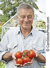 homme aîné, dans, serre, à, maison crue, tomates