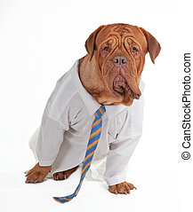 homme affaires, chien