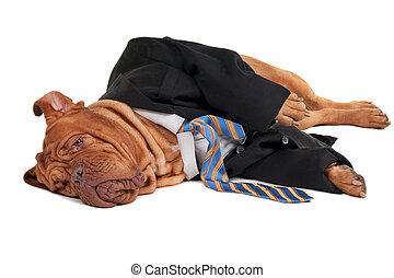 homme affaires, fatigué, chien