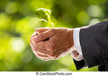homme affaires, plante, tenue, sol