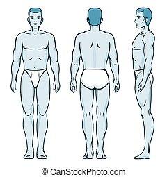 homme, corps, model., devant, dos, et, côté, humain, poses