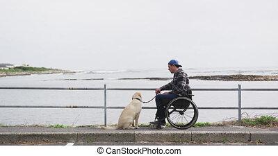 homme, fauteuil roulant, regarder, sien, chien, mer