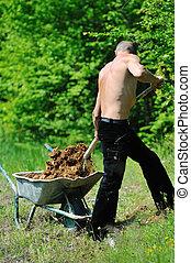 homme, travail, jardin