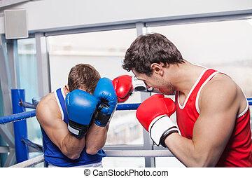 hommes, boxe, deux, combat, boxing., boxeurs, anneau