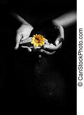 homok, virág
