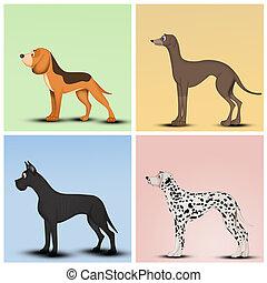 honden, fokken, gevarieerd