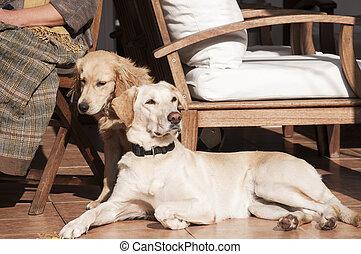 honden, op, herfst, zon, lit, portiek