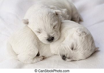 hondjes, slapende