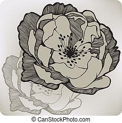 hondsroos, bloem, hand-drawing.