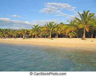 honduras, île, sable, arbre, exotique, paume, roatan, caraibe, plage blanche