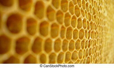 honey backgroung