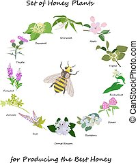 Honey banner with wild flowers wreath and bee