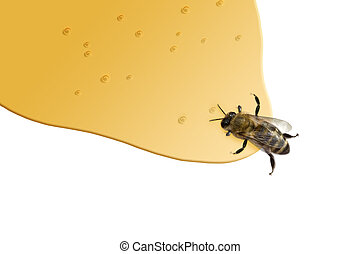 Honey Bee - a bee standing in honey