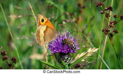 Honey Bee And Butterfly Collecting Nectar From Flower -...