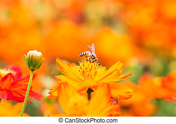 Honey bee collecting nectar from flower in the summer time.