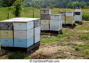 honey bee hives - Honey bee hives are busy wth bees