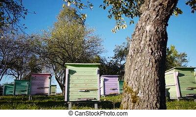 Honey bee hives in autumnal apple g - Slider shot of honey...