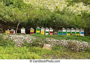 Honey bee hives in green forest
