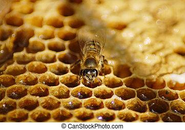 honey bee on combo wax