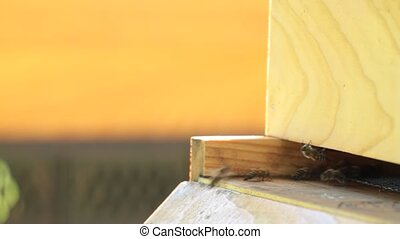 Honey bees and beehive