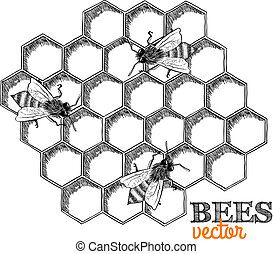 Honey bees and honeycomb isolated vector illustration