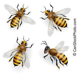 Honey bees flying