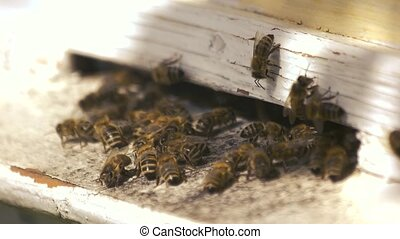 Honey bees in wooden box on a sunny day.