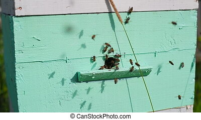 Honey Bees on Hive Entrance Hole. Flying Away and Returning...