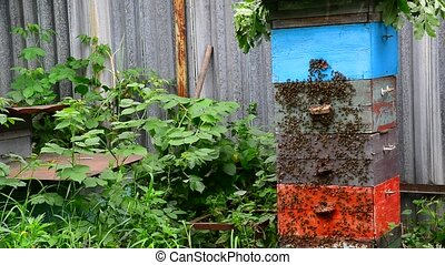 Honey bees on hive in the garden - Honey bees on a hive in...