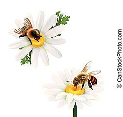 Honey Bees Sitting On Daisy Flowers