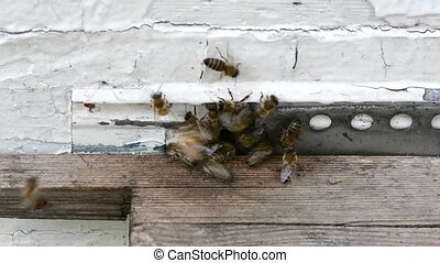 Honey bees swarming and flying