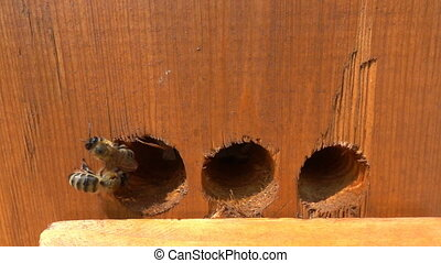 Honey bees taking off from hive filmed in slow motion.