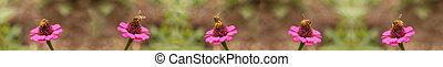 honey bees worker bee border background